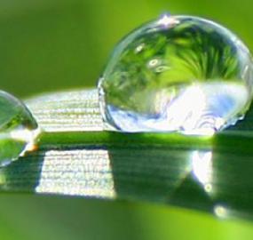 Eden Springs johtaa markkinaansa ympäristötoimenpiteillä